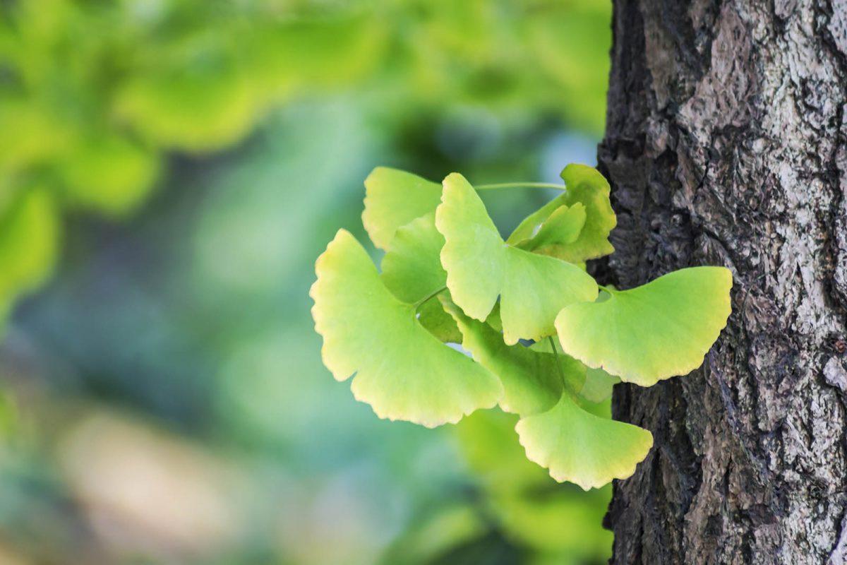 Info naturopathie